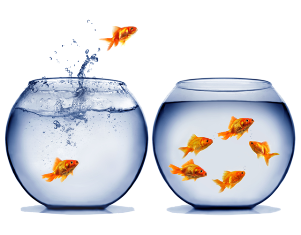 peixe pulando do aquario